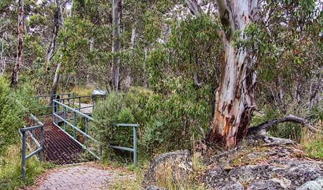 Sawpit track and bridge. Photo: Clint & Todd Wright
