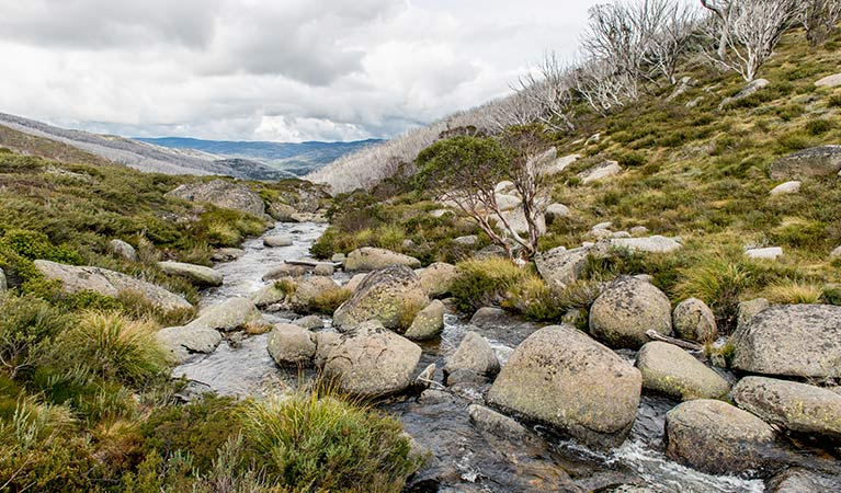 Alpine creek on Schlink Hut walking track, near Guthega in Kosciuszko National Park. Photo: John Spencer/OEH