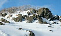 Snowfields, Kosciuszko National Park. Photo: Virginia Logan
