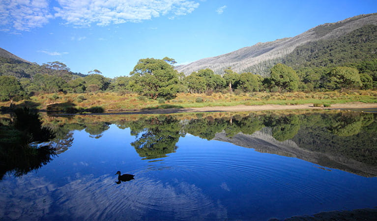 Thredbo Diggings campground, Kosciuszko National Park. Photo: Elinor Sheargold