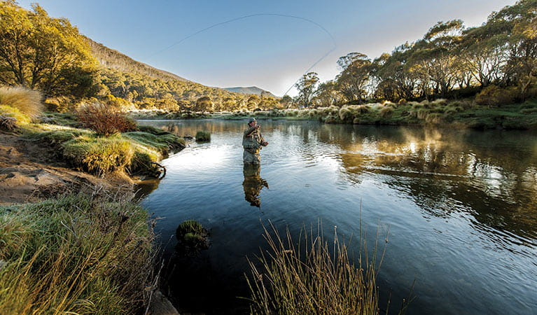 A fly fisherman casting his fly in the Thredbo river. Photo:Murray Vanderveer Copyright:NSW Government