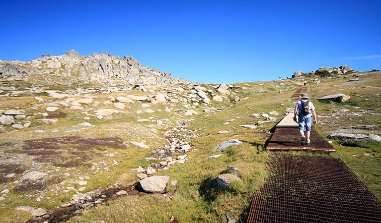 Thredbo to Mount Kosciusko walk, Kosciuszko National Park. Photo: Elinor Sheargold