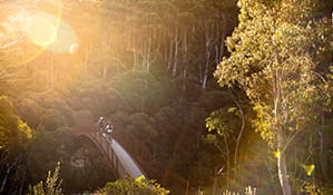 Two mountain bike riders cross a bridge along Thredbo Valley track at sunset, Kosciuszko National Park. Photo: Boen Ferguson/DPIE