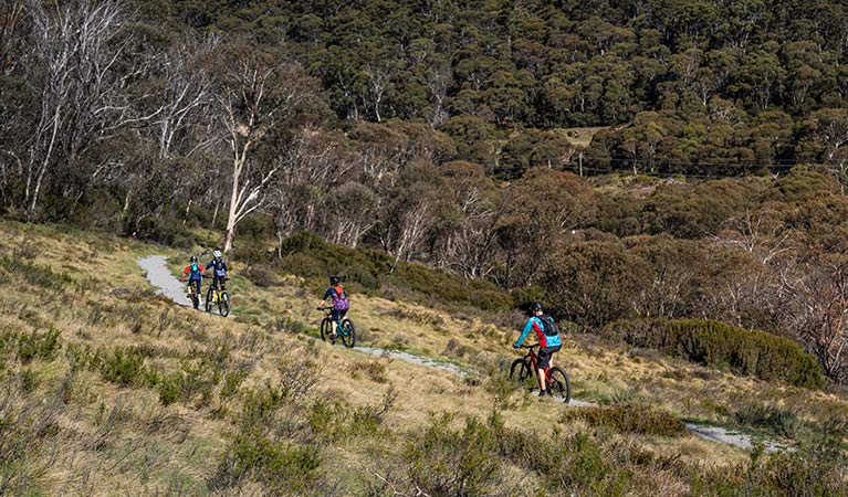 A family of 4 bike riders cycle through grasslands near Thredbo village on Thredbo Valley track, Kosciuszko National Park. Photo: Robert Mulally/DPIE