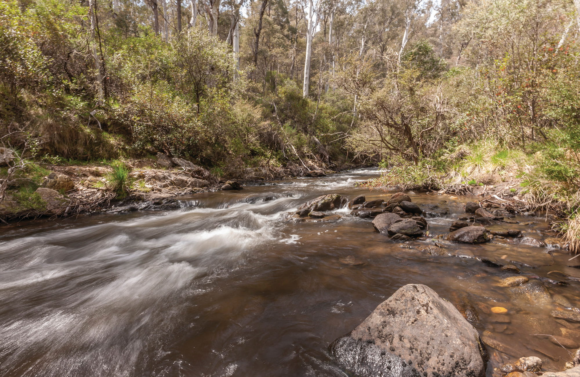 Buddong Creek near Buddong Falls Campground in the Tumut area of Kosciuszko National Park. Photo: Murray Vanderveer/OEH.