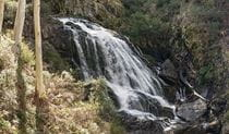 View of water cascading down top section of Buddong Falls surrounded by bushland. Photo: John Spencer/OEH.
