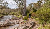 Old Mountain Road walking track, Kosciuszko National Park. Photo: Murray Vanderveer