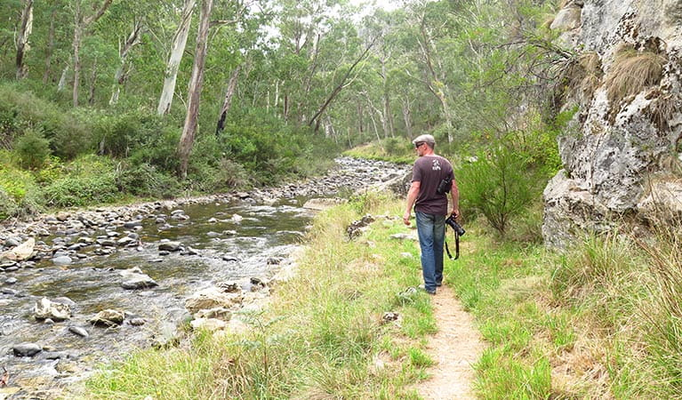 Yarrangobilly River walk in northern Kosciuszko National Park. Photo: Elinor Sheargold