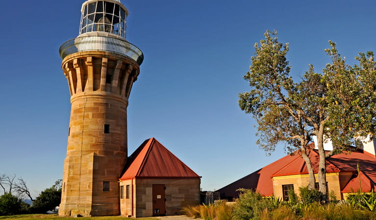 Barrenjoey Lighthouse and nearby tree. Photo: Kevin McGrath