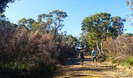 The Basin track and Mackerel track, Ku-ring-gai National Park. Photo: Andrew Richards