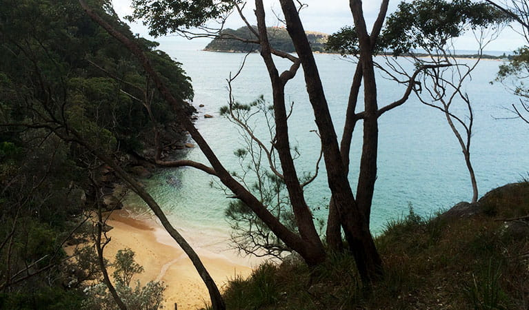 Resolute Beach can be reached via Aboriginal heritage walk, Ku-ring-gai Chase National Park. Photo: Natasha Webb /OEH