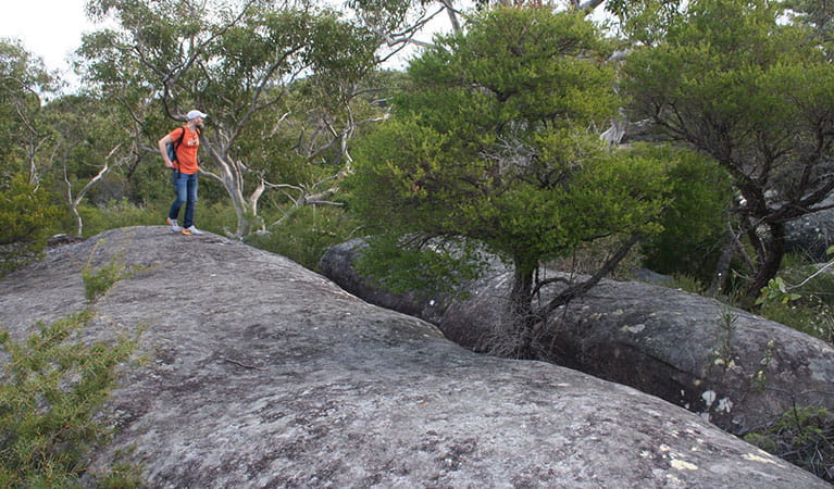 Interesting rock outcrops along Aboriginal Heritage walk, Ku-ring-gai Chase National Park. Photo: Natasha Webb /OEH
