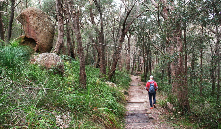 Tall forest along the Aboriginal Heritage walk, Ku-ring-gai Chase National Park. Photo: Natasha Webb /OEH