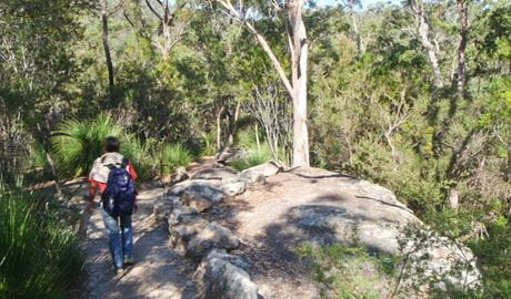 Gibberagong track, Ku-ring-gai Chase National Park. Photo: Andy Richards/NSW Government