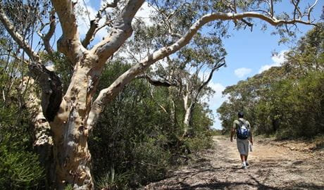 Salvation loop, Ku-ring-gai Chase National Park. Photo: Andy Richards/NSW Government