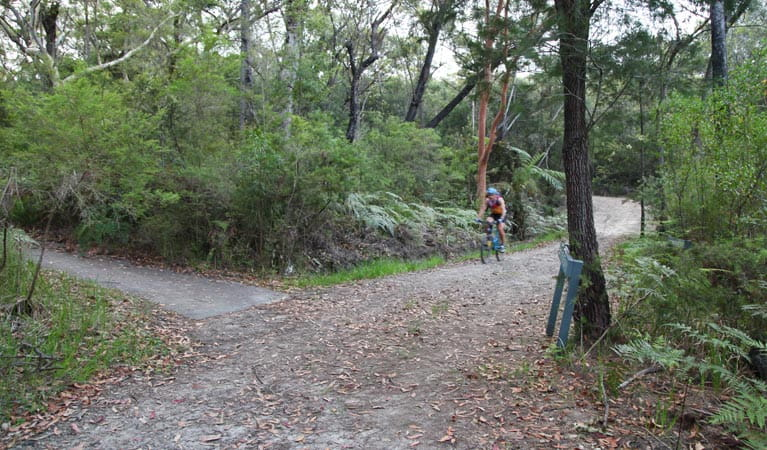 Sphinx track and Warrimoo track to Bobbin Head, Ku-ring-gai Chase National Park. Photo: Andy Richards/NSW Government