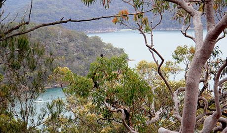 Enjoy glimpses of water views at the end of Topham walking track in Ku-ring-gai Chase National Park. Photo OEH/Natasha Webb