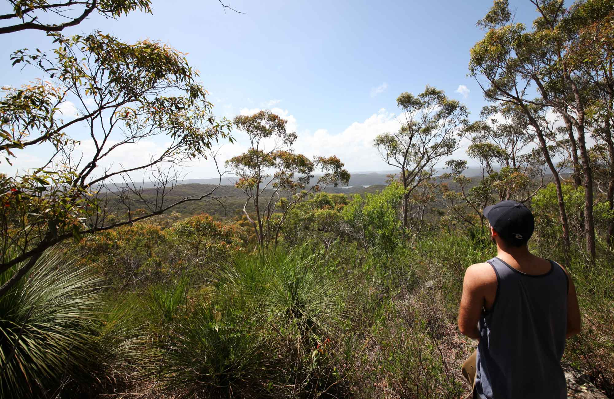 Willunga Trig walk, Ku-ring-gai Chase Natioanl Park. Photo: Andy Richards/NSW Government