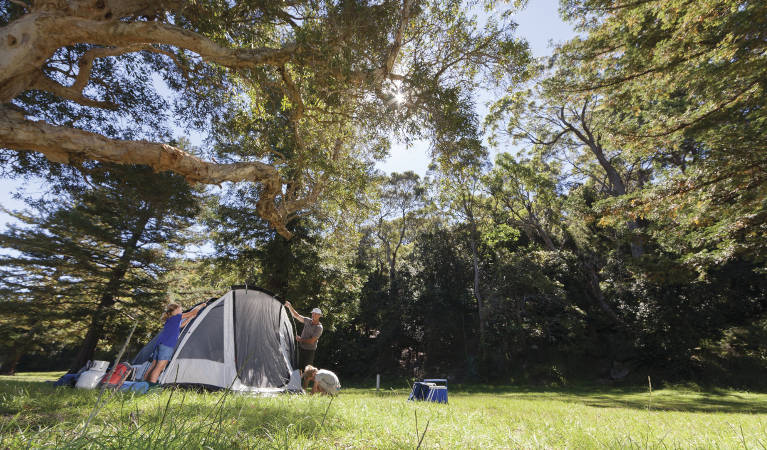 A family sets up their tent on a grassy area at The Basin campground in Ku-ring-gai Chase National Park. Photo: David Finnegan/OEH