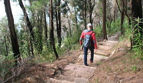 Man walking down the West Head army track. Photo: Natasha Webb/NPWS