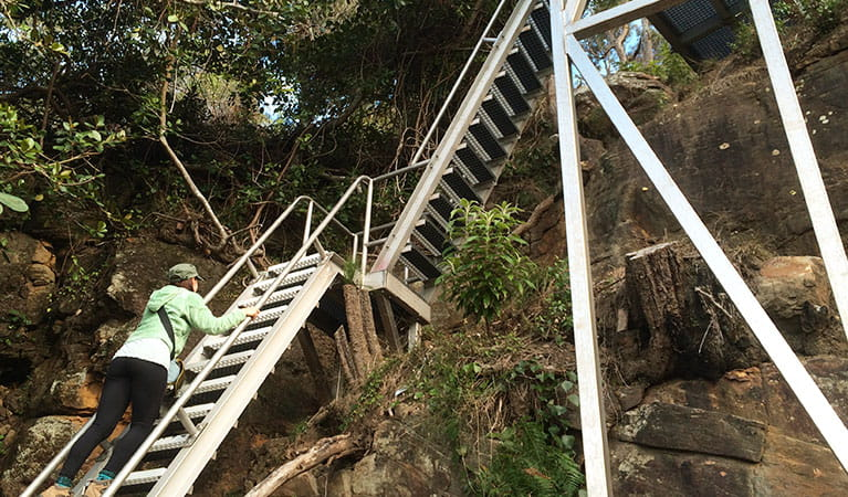 Climbing one of the West Head army track ladders. Photo: Matt Graham/NPWS