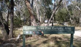 Lemon Tree Flat campground, Kwiambal National Park. Photo: OEH