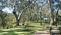Lemon Tree campground, Kwiambal National Park. Photo: Patricia Wilkinson