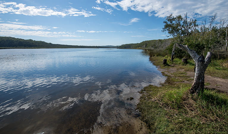 Perch Hole picnic area, Lake Innes Nature Reserve. Photo: John Spencer/NSW Government