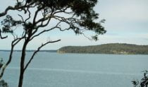 Wangi circuit walking track, Lake Macquarie State Conservation Area. Photo: Susan Davis/NSW Government