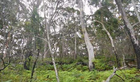 Bakers Flat picnic area, Lane Cove National Park. Photo: Debbie McGerty