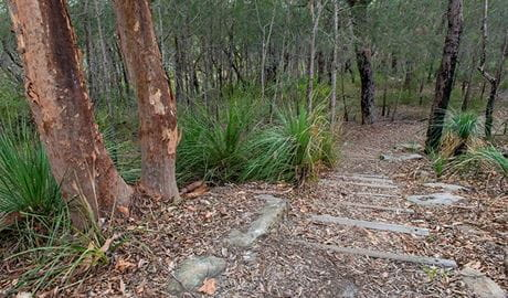 Fiddens Wharf walking track, Lane Cove National Park. Photo: John Spencer