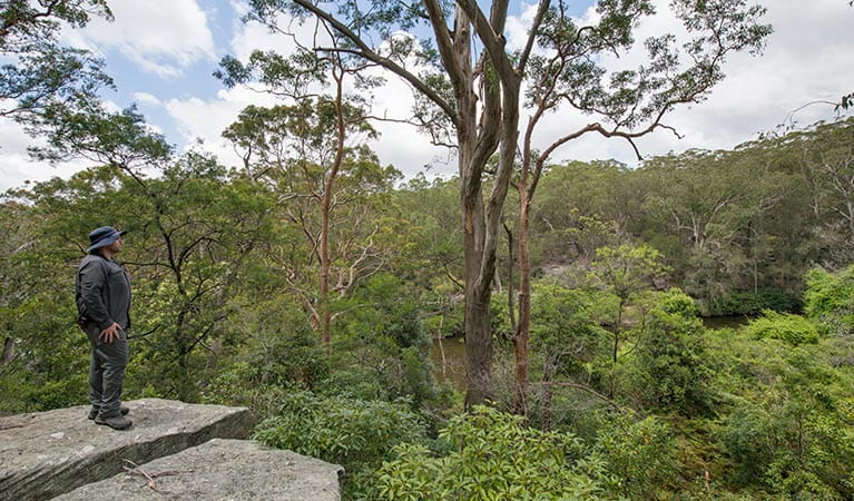 Great North Walk, Lane Cove National Park. Photo: John Spencer/OEH