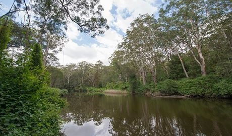 Great North Walk - Lane Cove National Park, Lane Cove National Park. Photo: John Spencer