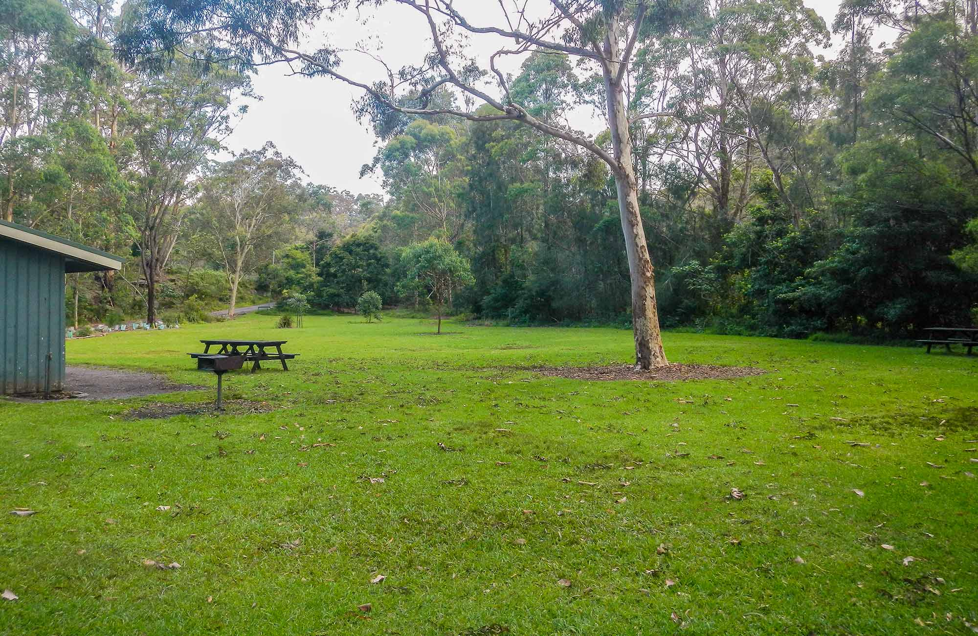 Haynes Flat picnic area, Lane Cove National Park. Photo: Debbie McGerty