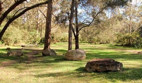 Moola picnic area, Lane Cove National Park. Photo: Natalie Jenkins