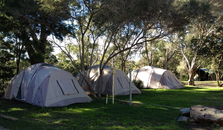 A row of tents in the shade at Lane Cove Holiday Park - caravan park. Photo: Claire Franklin