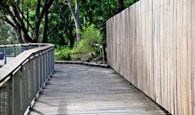 Riverside walking track, Lane Cove National Park. Photo: Kevin McGrath