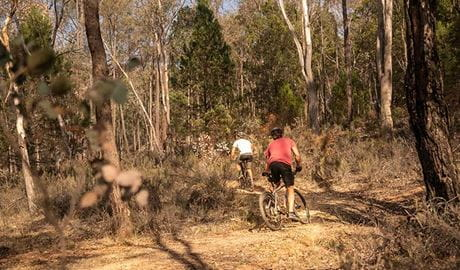 Two mountain bike riders cycle through woodland on Livingstone multi-use trail, Livingstone National Park. Photo: Robert Mulally/DPIE