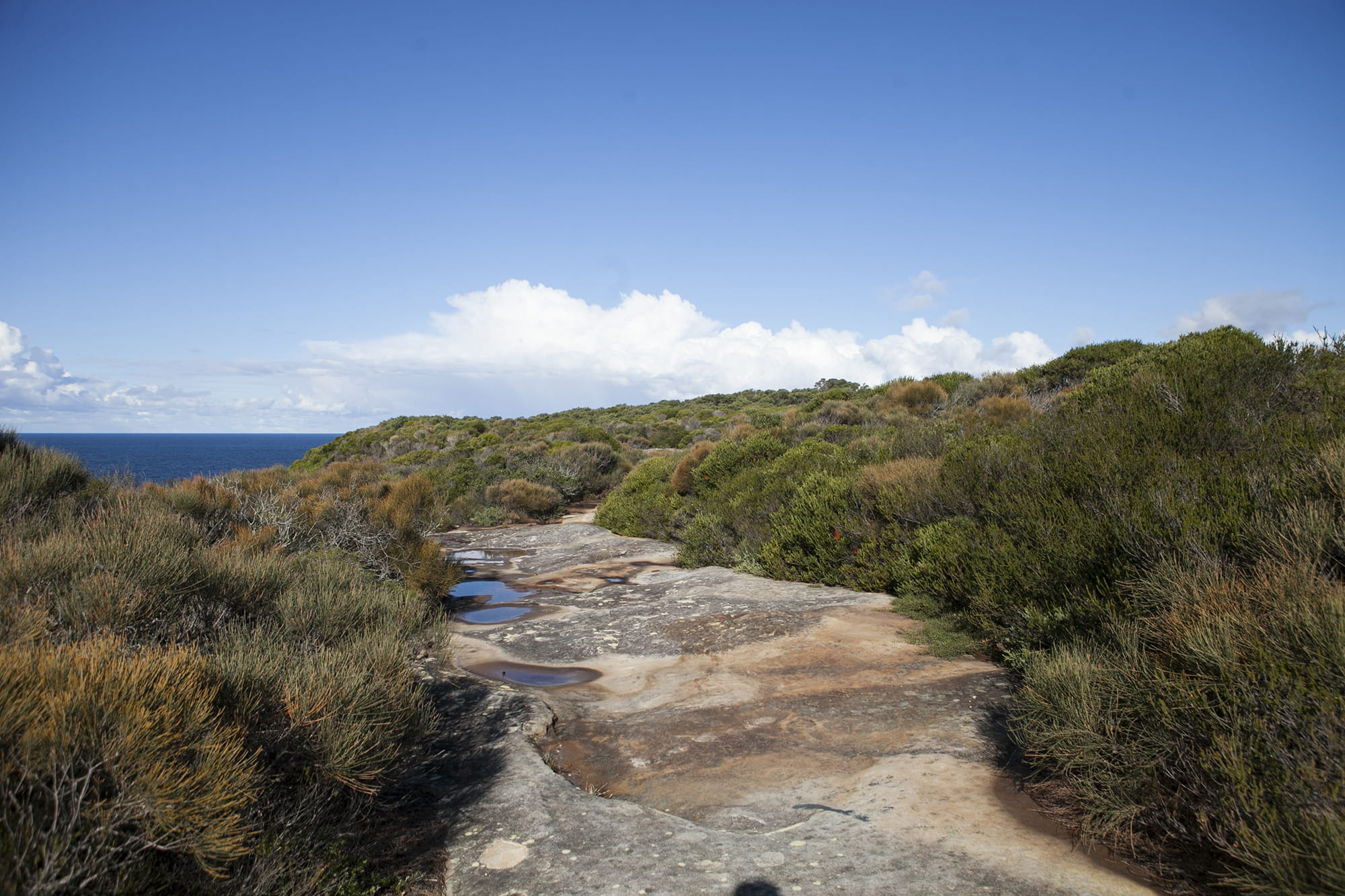 Coastal heathland atop sandstone escarpment at Boora Boint, Malabar National Park. Photo: Chad Weston/OEH