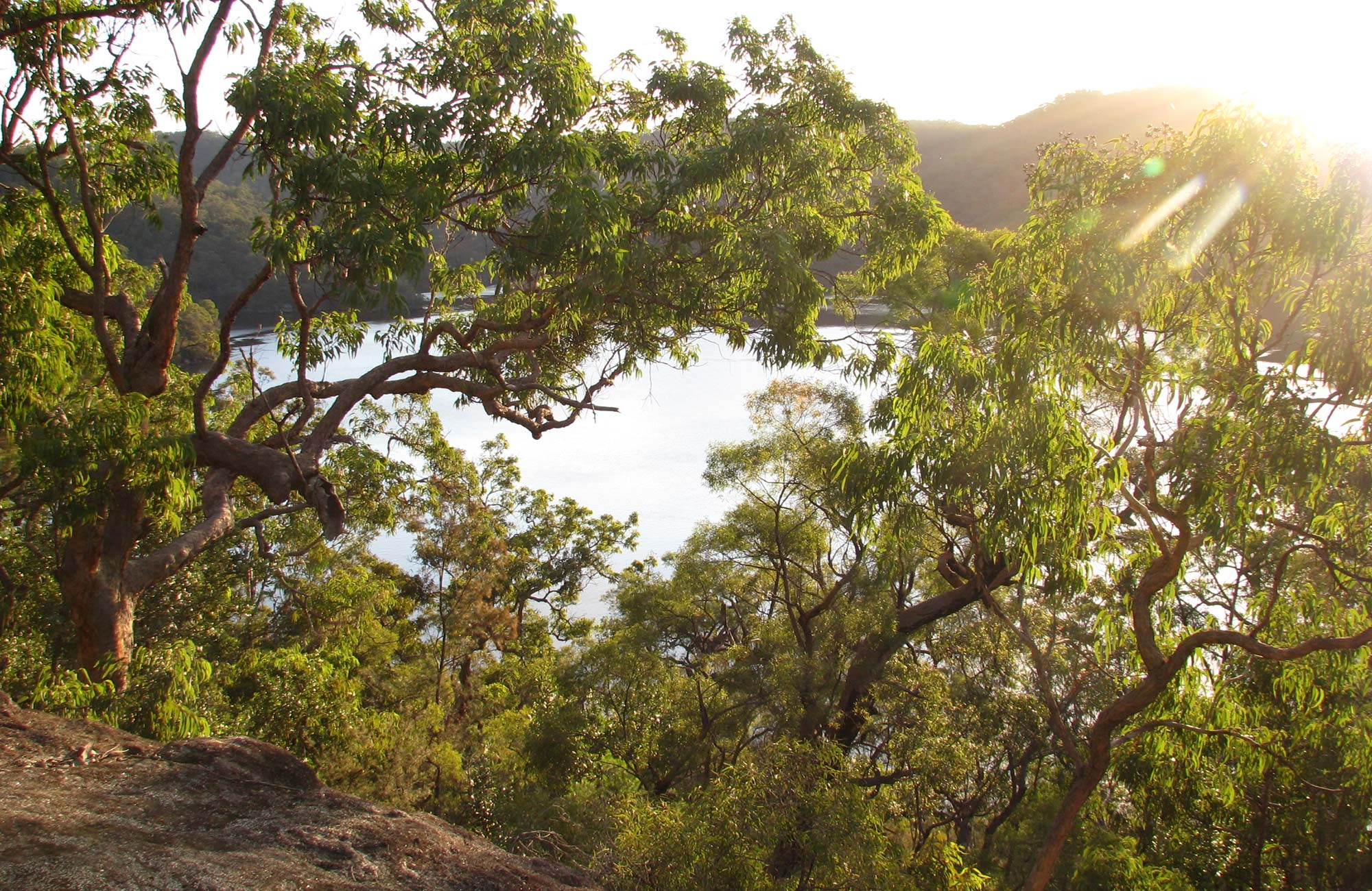 Sunrise view through angophora trees to Berowra Creek, from Coba Ridge walking track, Marramarra National Park. Photo: Tegan Burton/OEH