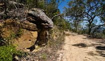 Marramarra National Park, Canoelands Ridge track. Photo: John Spencer/NSW Government