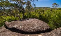 Marramarra National Park, Marramarra Ridge trail. Photo: John Spencer/NSW Government