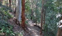 Byrrill Creek walking track, Mebbin National Park. Photo: D Hofmeyer/NSW Government