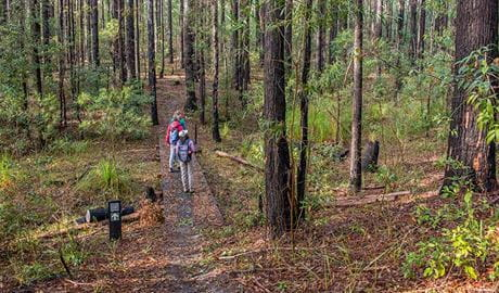 Tallowwood forest, Giriwa walking track, Meroo National Park. Photo: Michael Van Ewijk/OEH