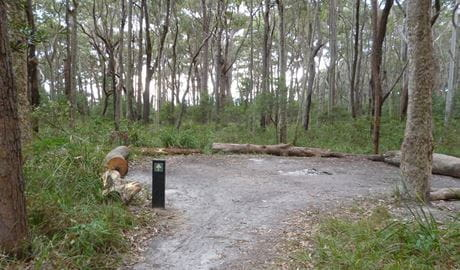 Meroo Head campground. Photo: Meghan Kempster/NPWS