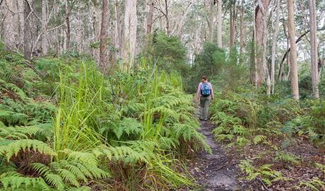 Bushwalker walking along Meroo Lake walking track, Meroo National Park. Photo: Michael van Ewijk/OEH
