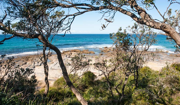 Sunburnt Beach campground, Meroo National Park. Photo: Michael van Ewijk/OEH
