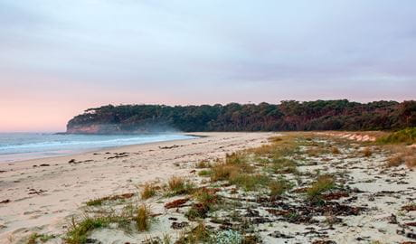 Termeil Beach picnic area, Meroo National Park. Photo: Michael van Ewijk