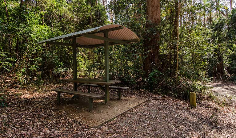 Bird Tree picnic area, Middle Brother National Park. Photo: John Spencer/NSW Government