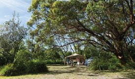 Tent in Aragunnu campground, Mimosa Rocks National Park. Photo: John Yurasek Copyright:NSW Government